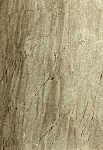 Essence Forest Porcelain Floor Tile 12