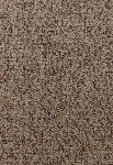 Creative Nature Taupe Mist Carpet by Mohawk