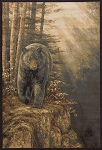 United Weavers Designer Genesis - Rocky Black Bear 535 48917 Area Rug